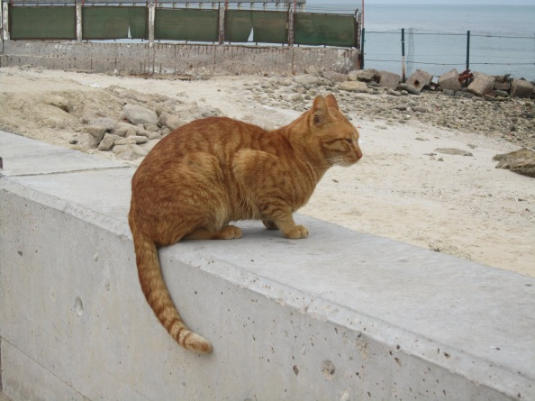 the beach cat