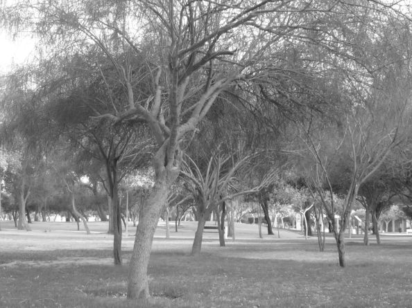 trees at the park