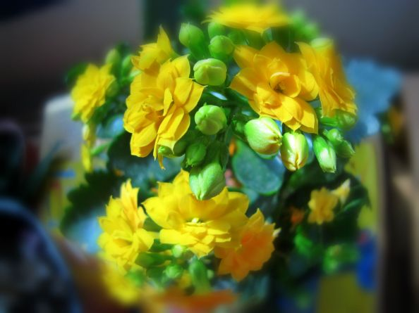 flowerbuds.jpg