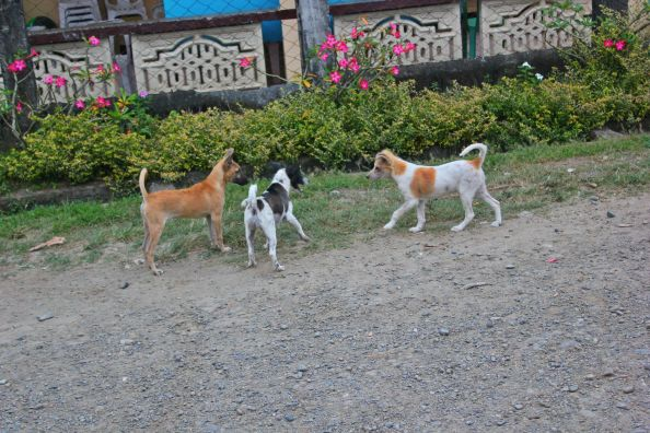 Three dogs having a friendly conversation...