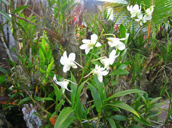 whiteorchids.jpg