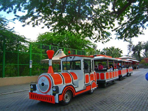 Zoo train on the move