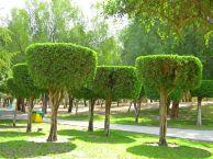 Photo taken at Fintas Park, Q8