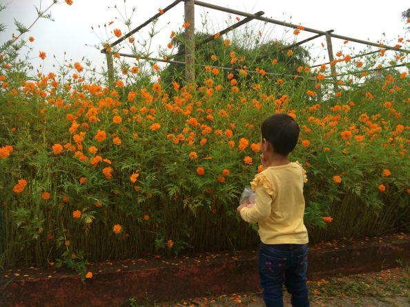 Abby admiring the flowers